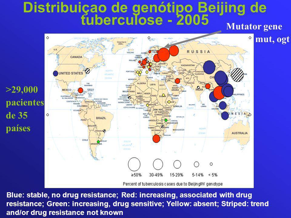 Distribuiçao de genótipo Beijing de tuberculose - 2005