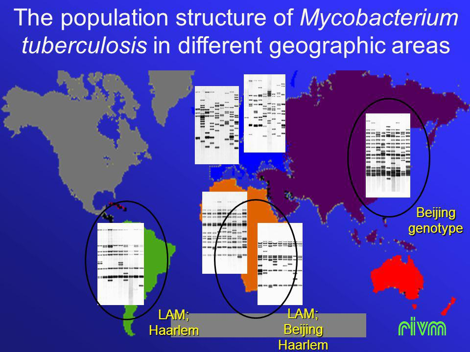 The population structure of Mycobacterium tuberculosis in different geographic areas