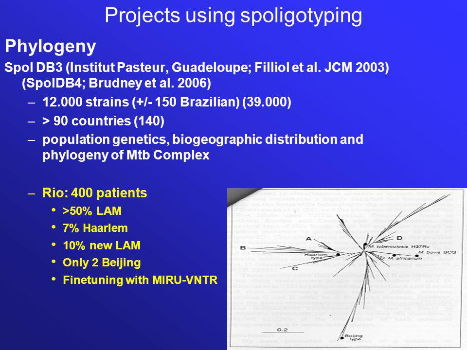 Projects using spoligotyping