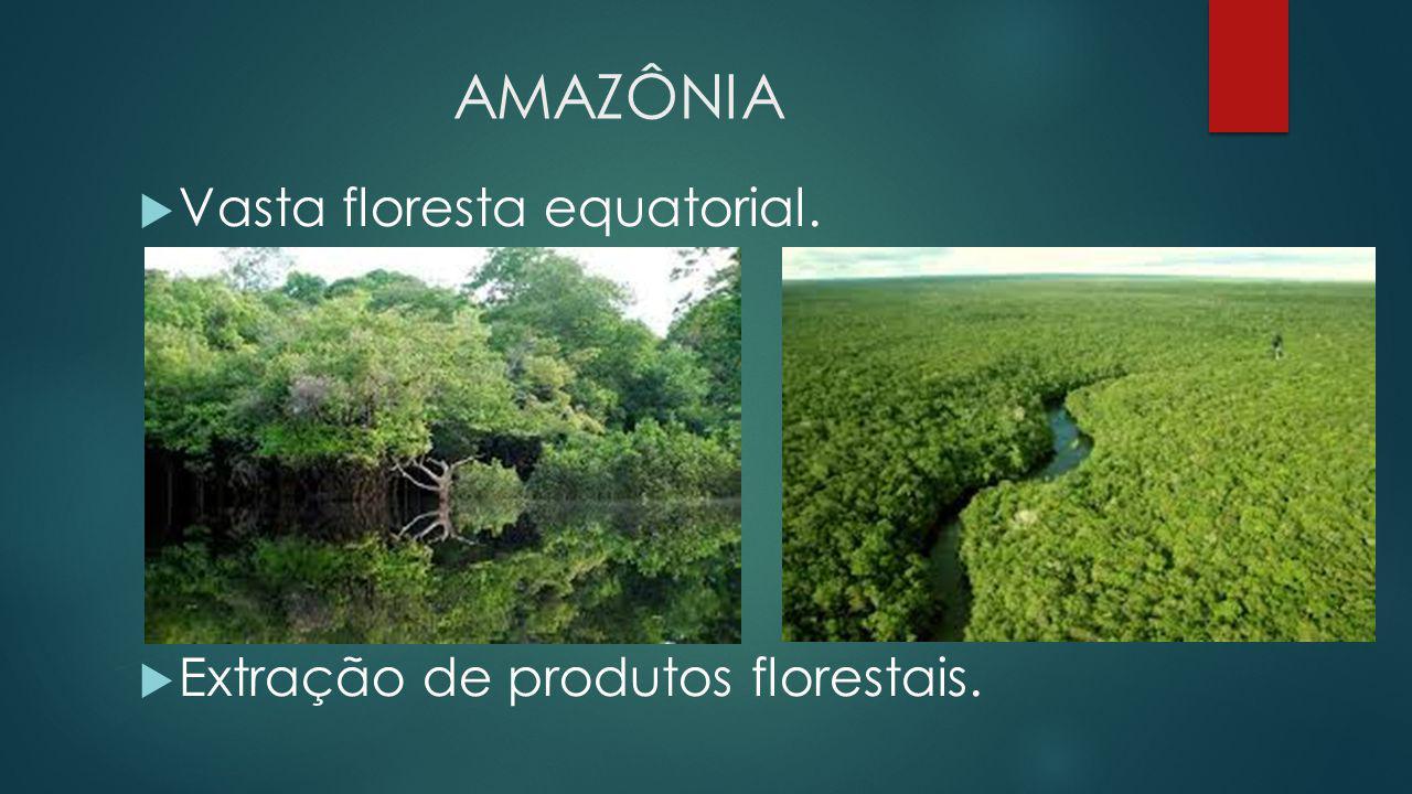 AMAZÔNIA Vasta floresta equatorial. Extração de produtos florestais.