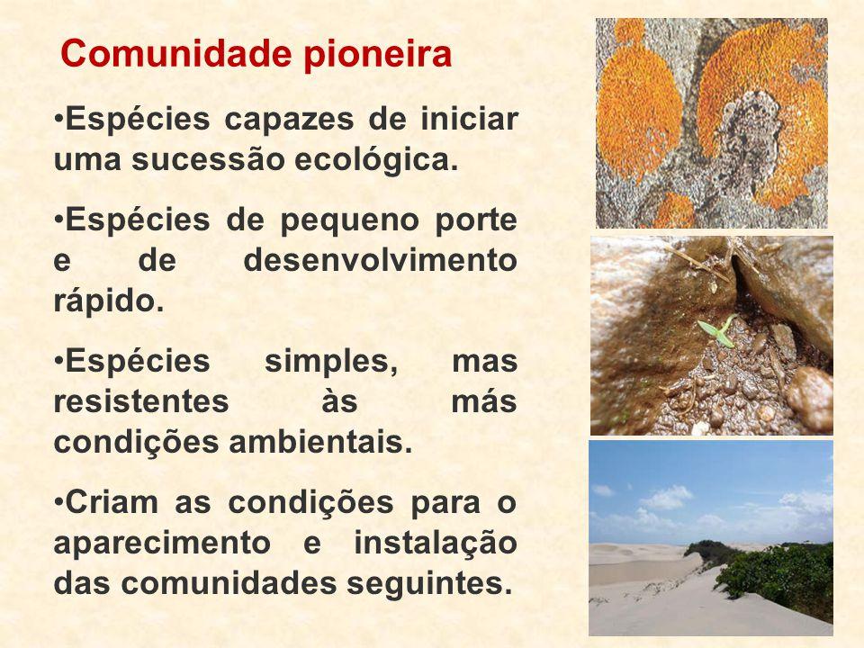 Comunidade pioneira Espécies capazes de iniciar uma sucessão ecológica. Espécies de pequeno porte e de desenvolvimento rápido.