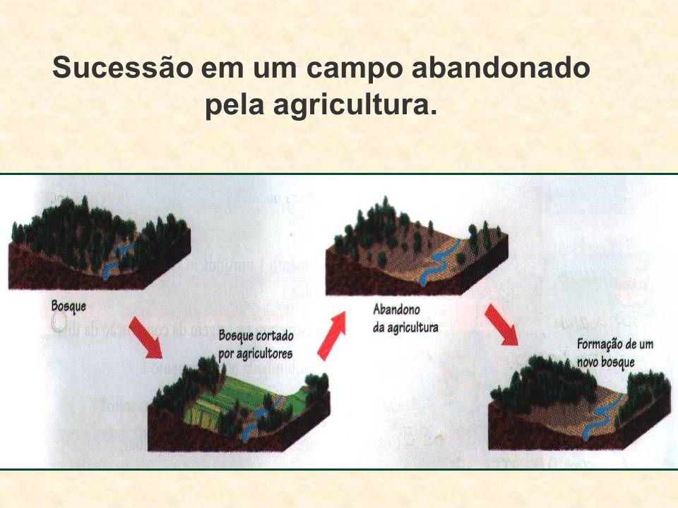 Sucessão em um campo abandonado pela agricultura.
