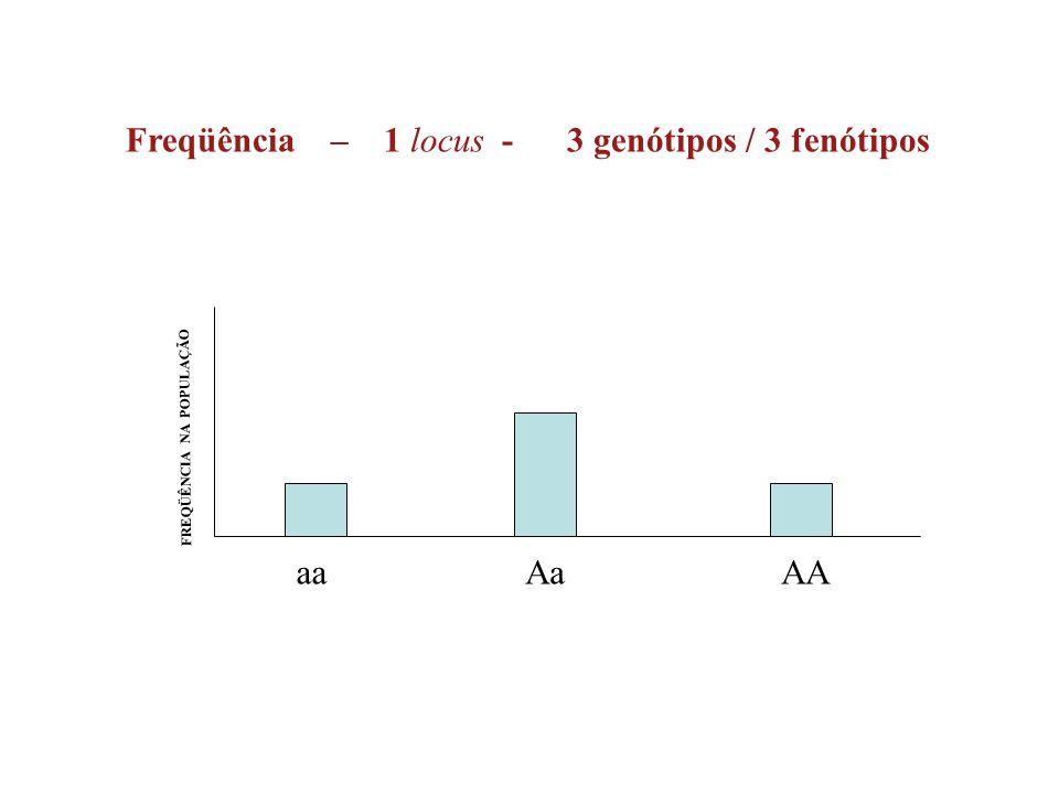 Freqüência – 1 locus - 3 genótipos / 3 fenótipos