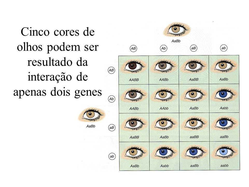 Cinco cores de olhos podem ser resultado da interação de apenas dois genes