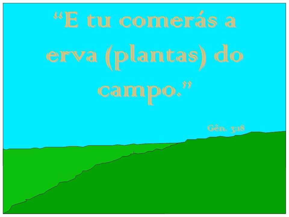 E tu comerás a erva (plantas) do campo. Gên. 3:18