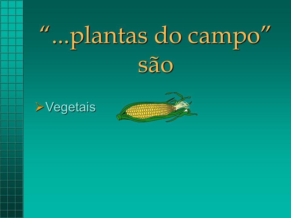 ...plantas do campo são Vegetais