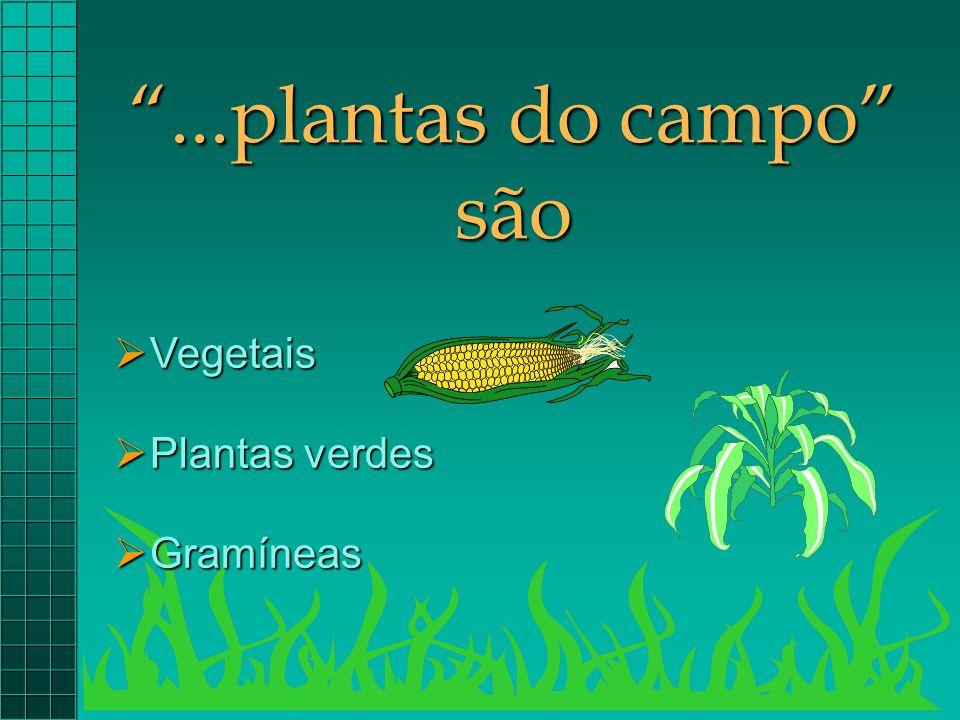 ...plantas do campo são Vegetais Plantas verdes Gramíneas