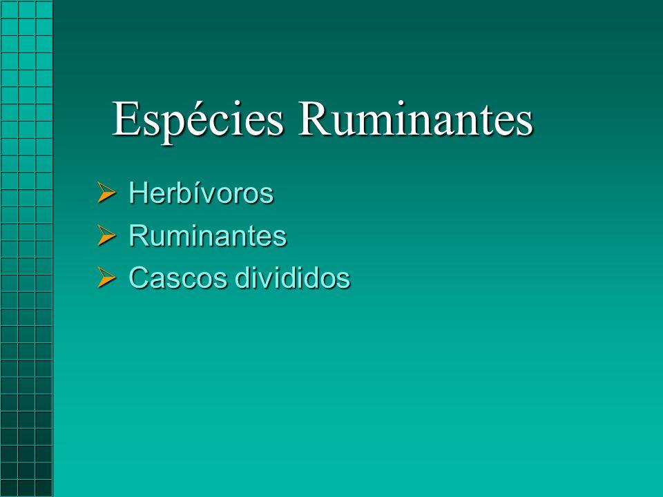 Espécies Ruminantes Herbívoros Ruminantes Cascos divididos
