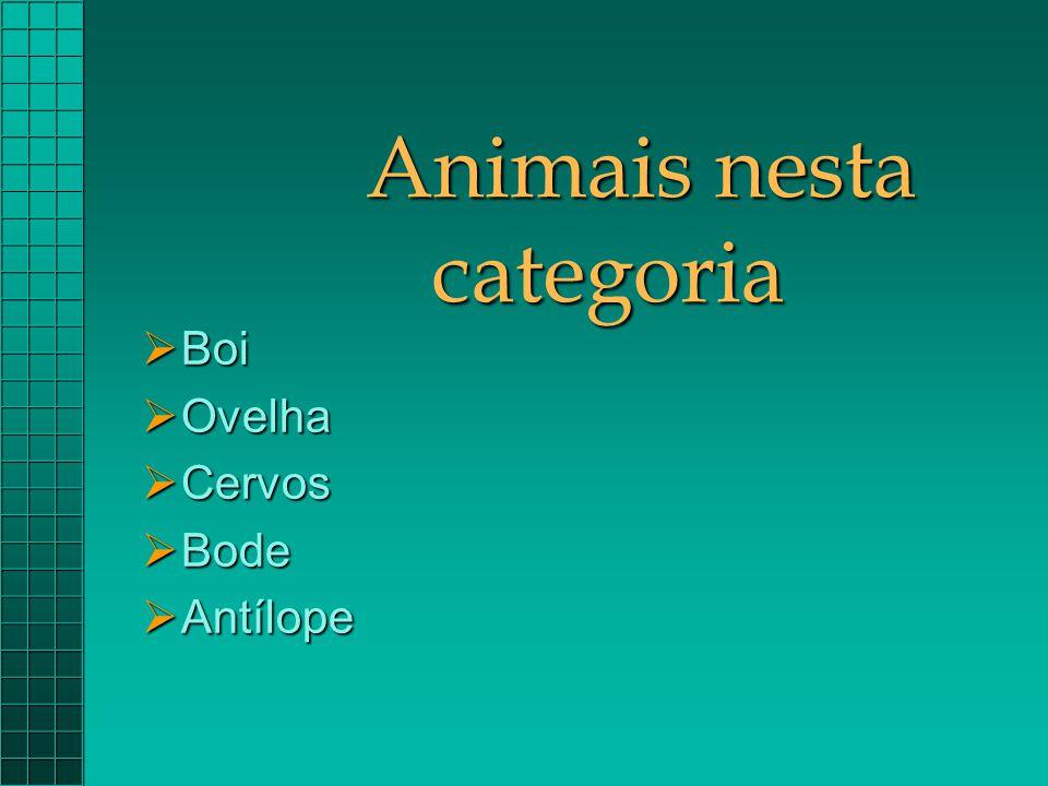 Animais nesta categoria