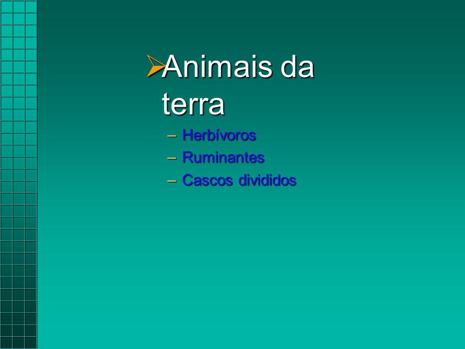 Animais da terra Herbívoros Ruminantes Cascos divididos