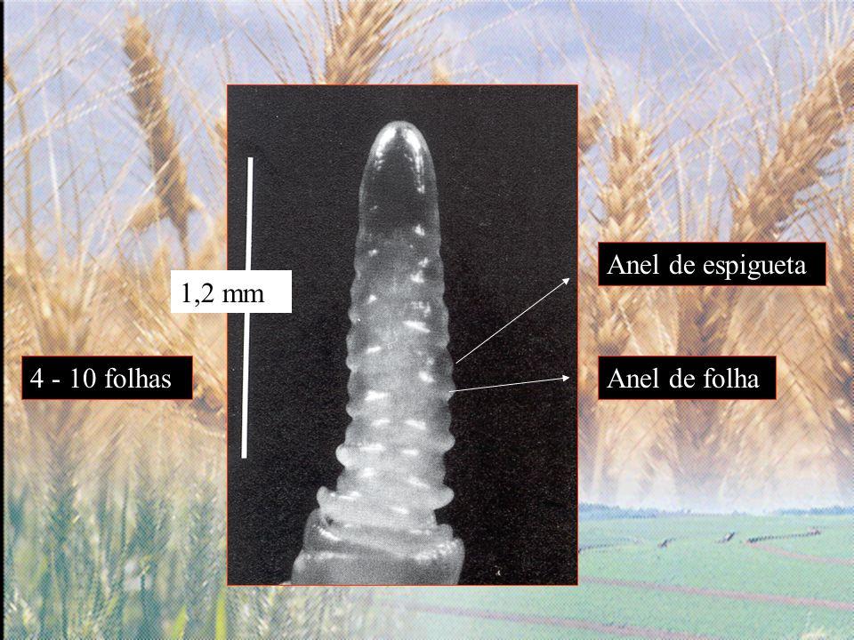 Anel de espigueta 1,2 mm 4 - 10 folhas Anel de folha