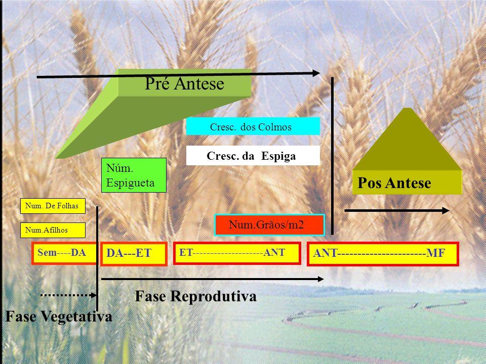 Pré Antese Pos Antese Fase Reprodutiva Fase Vegetativa