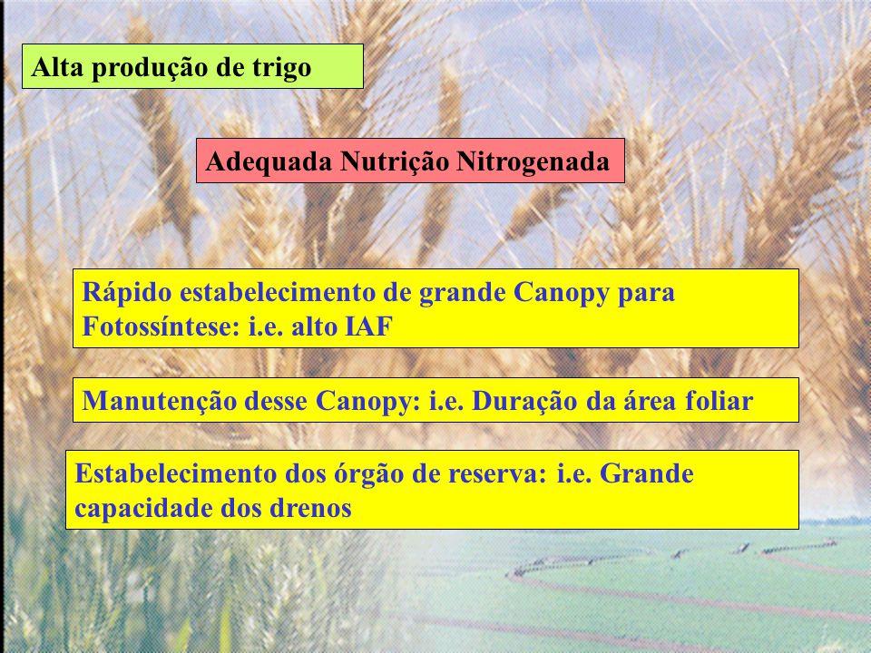 Alta produção de trigo Adequada Nutrição Nitrogenada. Rápido estabelecimento de grande Canopy para Fotossíntese: i.e. alto IAF.