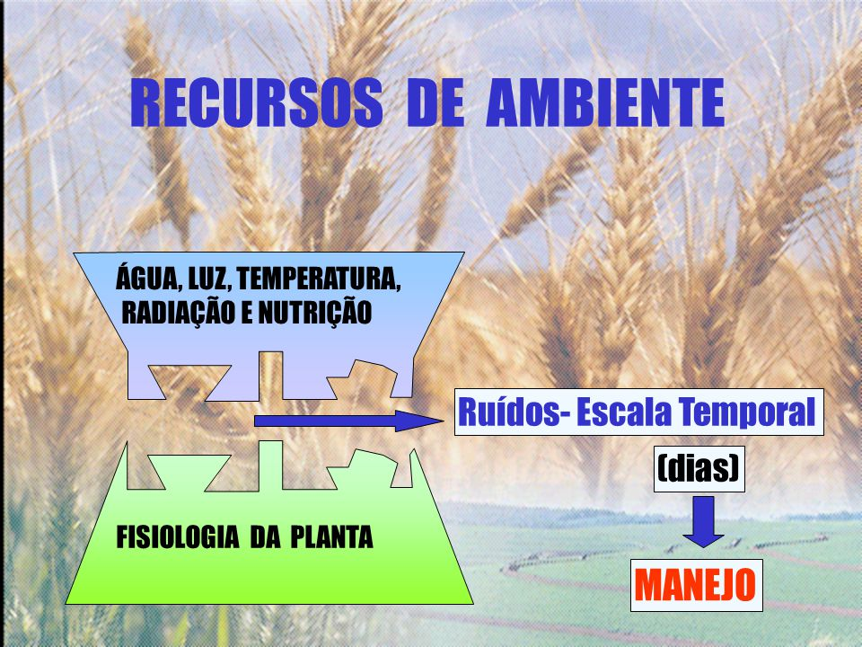 RECURSOS DE AMBIENTE MANEJO Ruídos- Escala Temporal (dias)