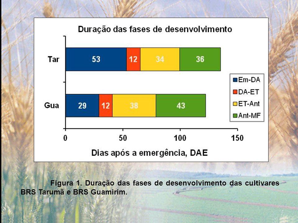 Figura 1. Duração das fases de desenvolvimento das cultivares BRS Tarumã e BRS Guamirim.