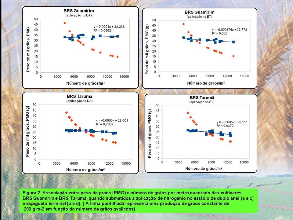 Figura 2. Associação entre peso de grãos (PMG) e número de grãos por metro quadrado das cultivares