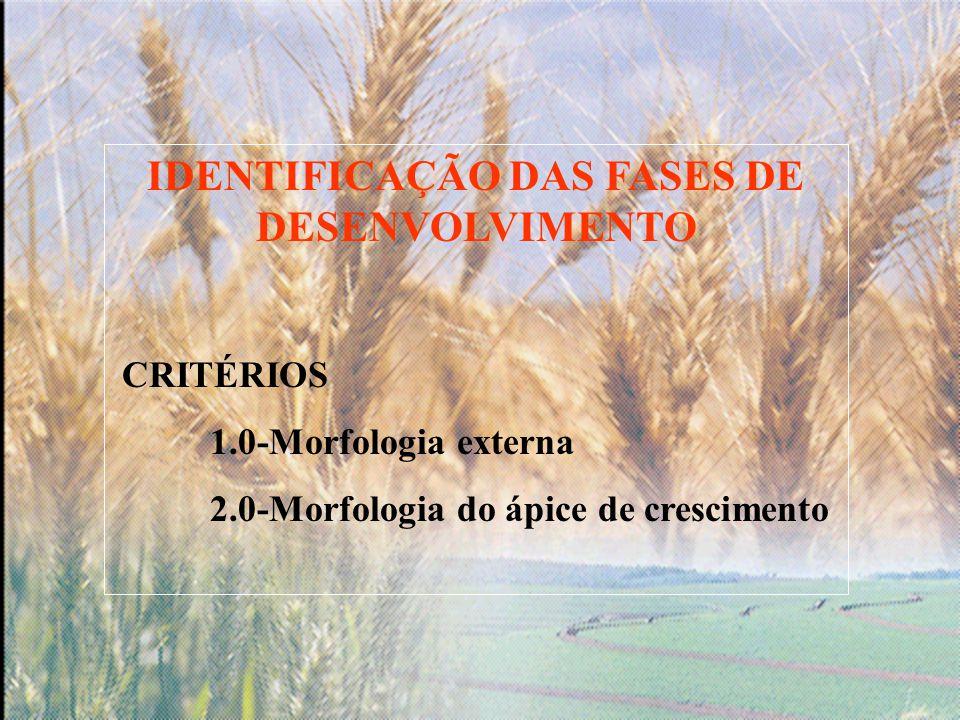 IDENTIFICAÇÃO DAS FASES DE DESENVOLVIMENTO