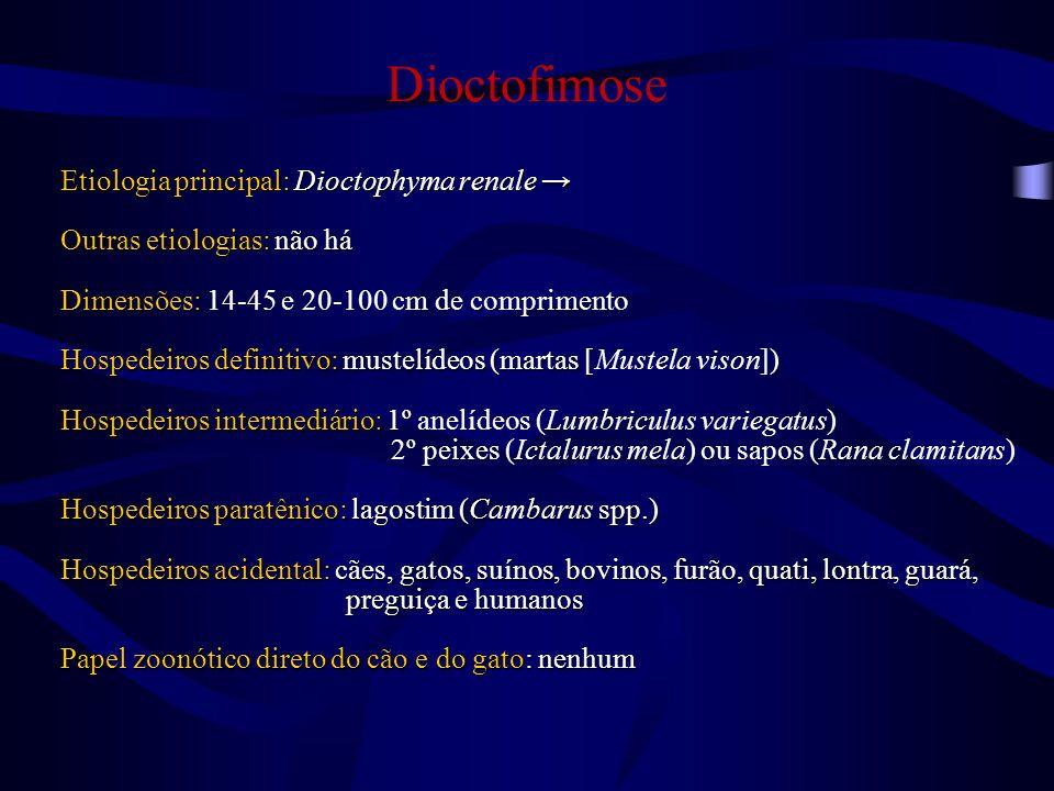 Dioctofimose Etiologia principal: Dioctophyma renale →