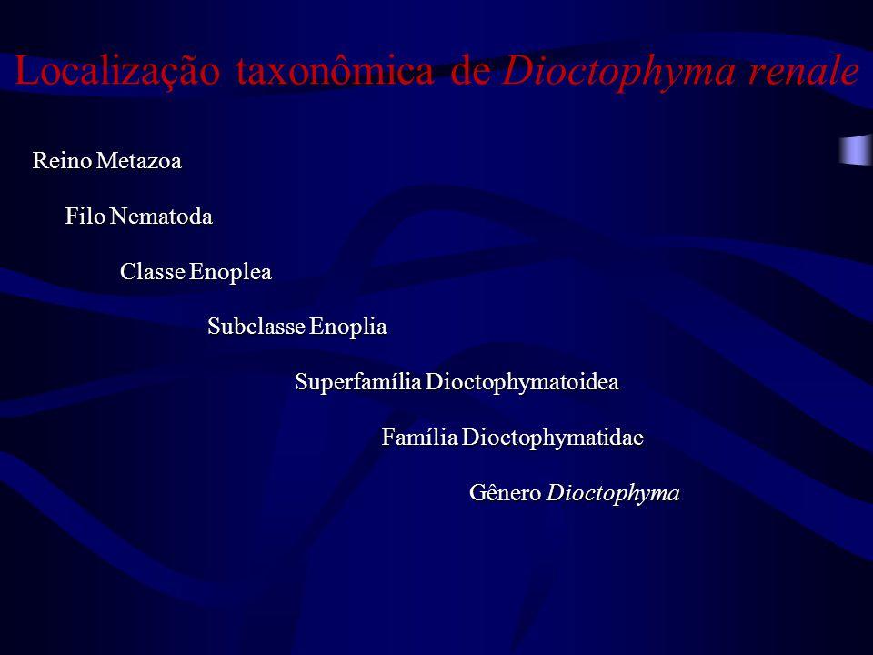 Localização taxonômica de Dioctophyma renale
