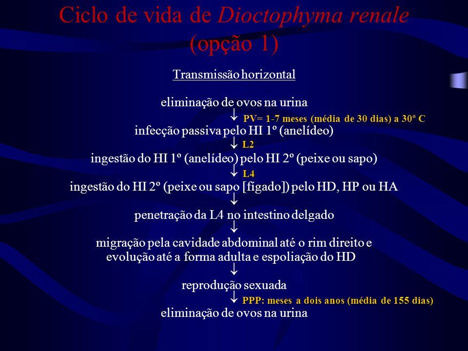 Ciclo de vida de Dioctophyma renale (opção 1)