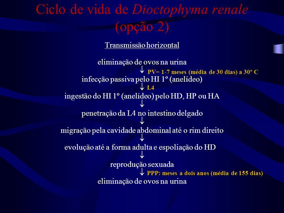 Ciclo de vida de Dioctophyma renale (opção 2)