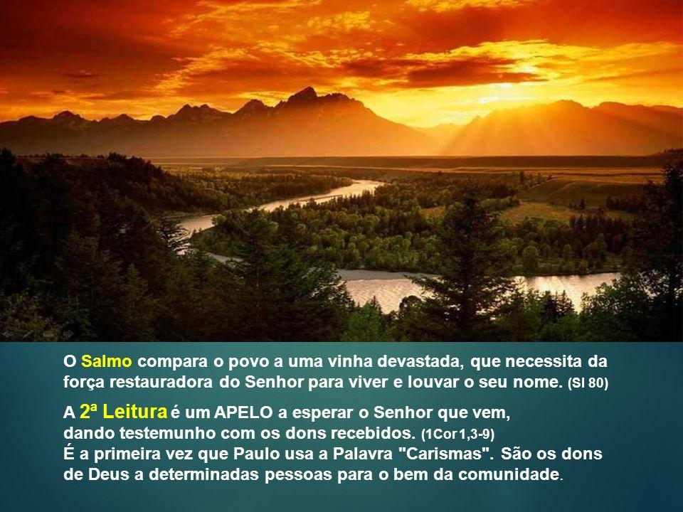 O Salmo compara o povo a uma vinha devastada, que necessita da força restauradora do Senhor para viver e louvar o seu nome. (Sl 80)