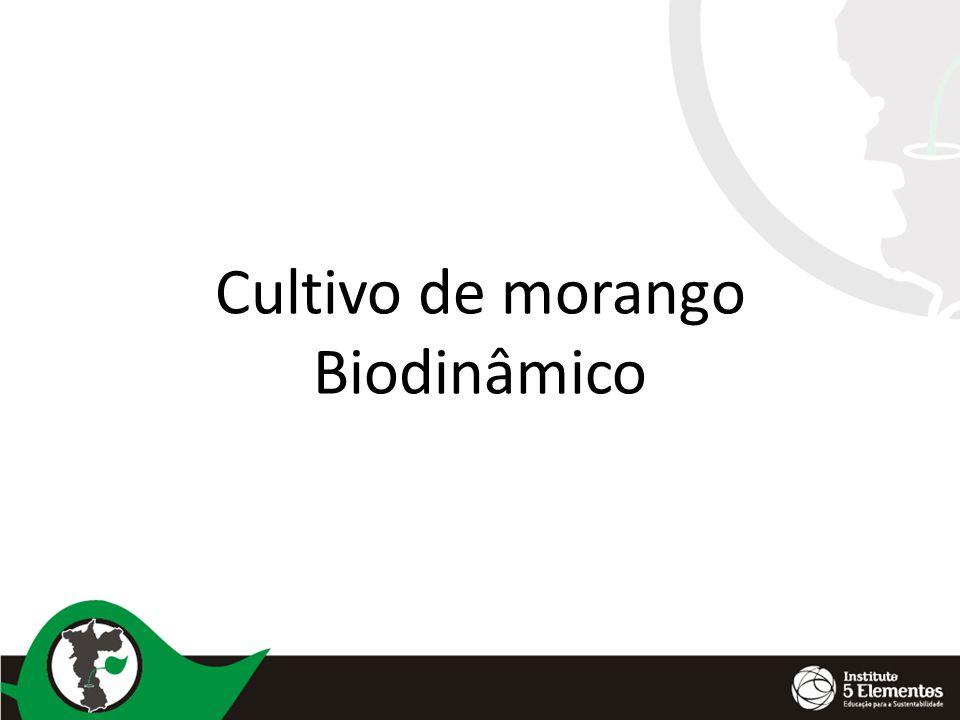 Cultivo de morango Biodinâmico