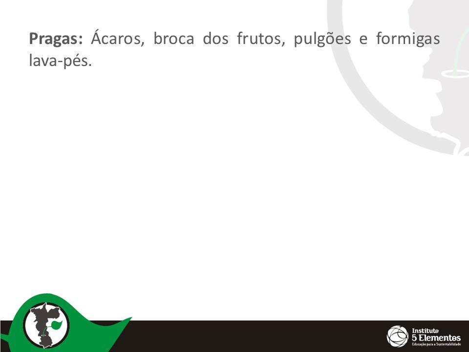 Pragas: Ácaros, broca dos frutos, pulgões e formigas lava-pés.