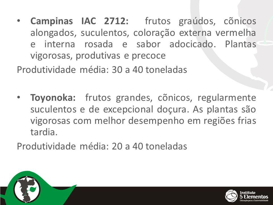 Campinas IAC 2712: frutos graúdos, cõnicos alongados, suculentos, coloração externa vermelha e interna rosada e sabor adocicado. Plantas vigorosas, produtivas e precoce