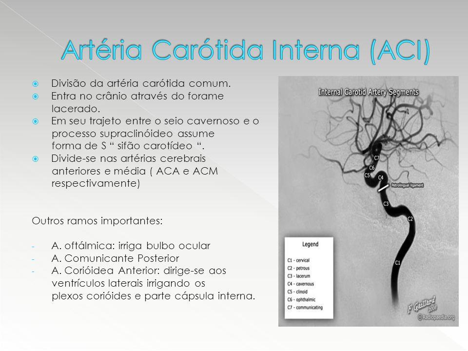 Artéria Carótida Interna (ACI)
