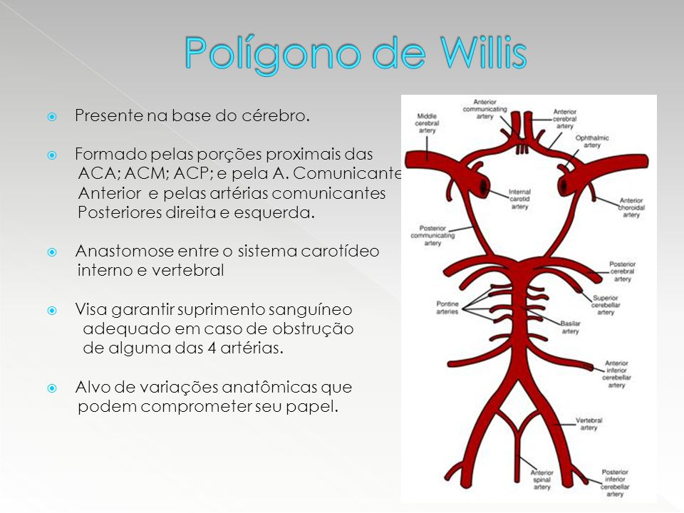 Polígono de Willis Presente na base do cérebro.