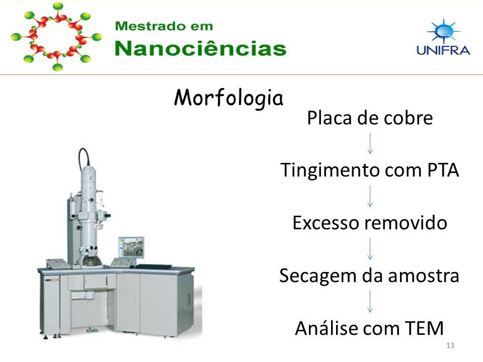 Morfologia Placa de cobre Tingimento com PTA Excesso removido