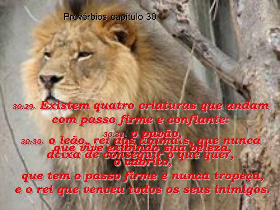 30:29- Existem quatro criaturas que andam com passo firme e confiante: