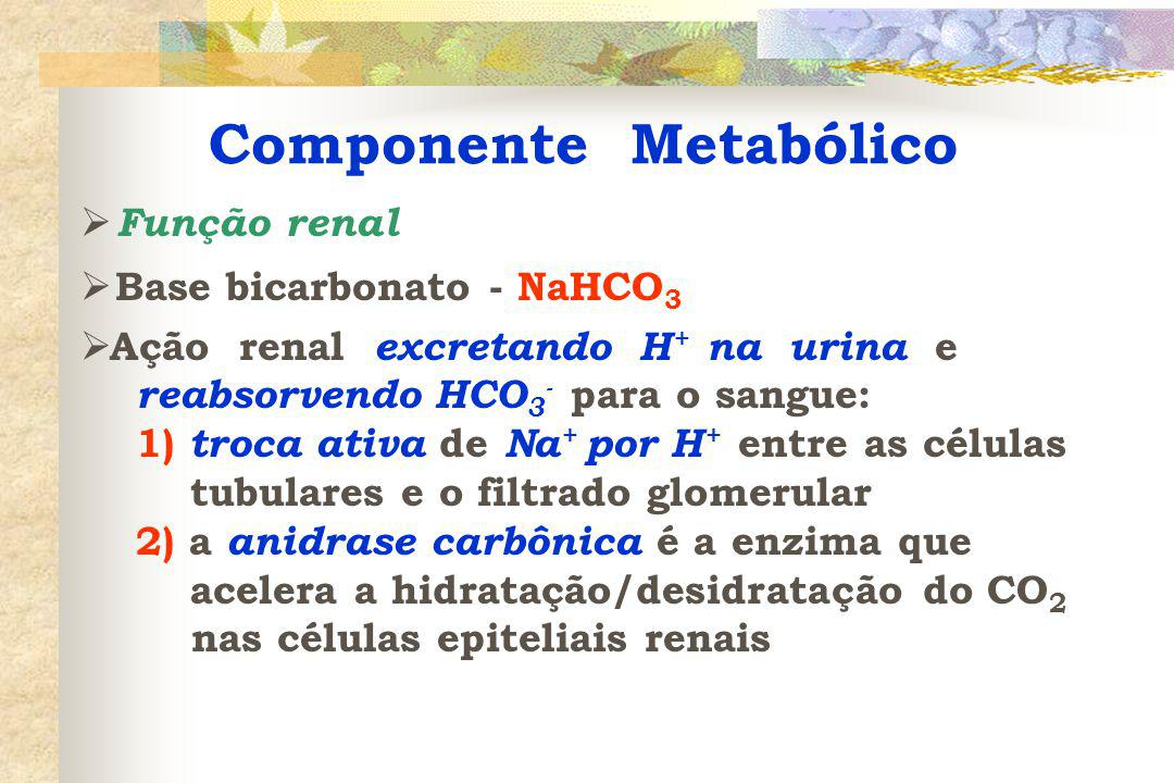 Componente Metabólico