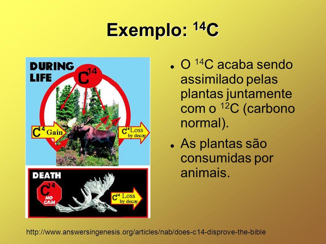 Exemplo: 14C O 14C acaba sendo assimilado pelas plantas juntamente com o 12C (carbono normal). As plantas são consumidas por animais.