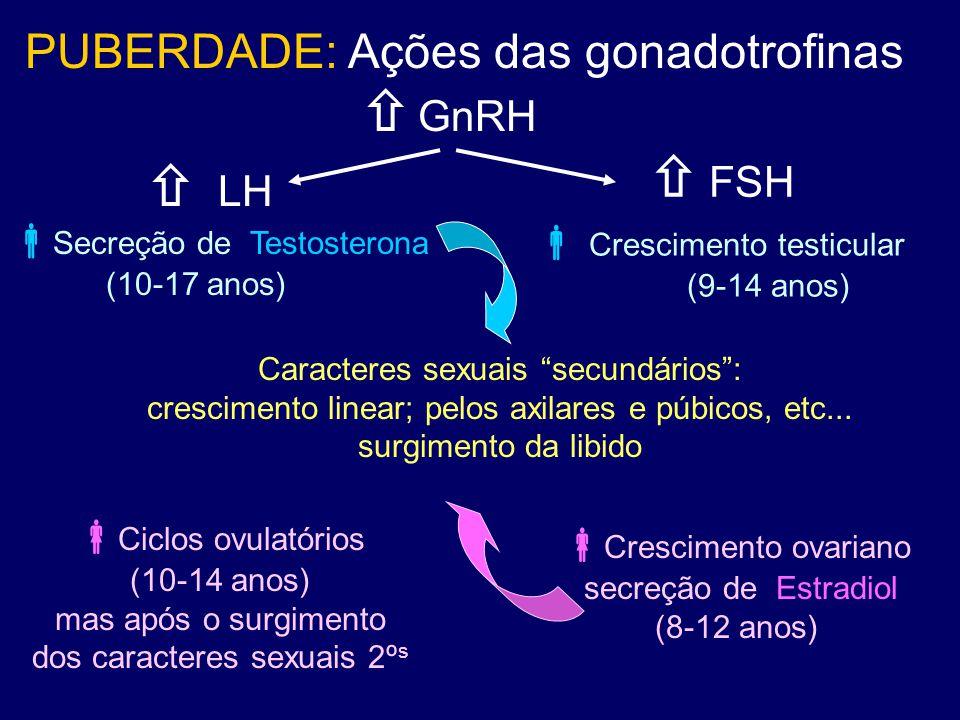  GnRH  FSH PUBERDADE: Ações das gonadotrofinas  LH