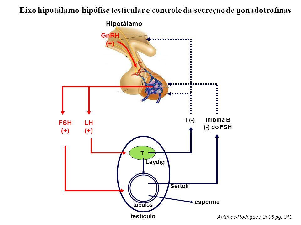 Eixo hipotálamo-hipófise testicular e controle da secreção de gonadotrofinas