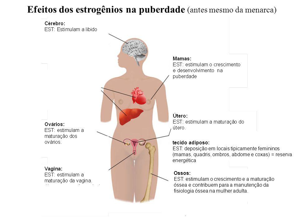 Efeitos dos estrogênios na puberdade (antes mesmo da menarca)