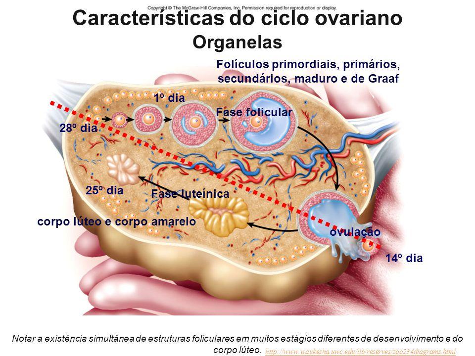 Características do ciclo ovariano