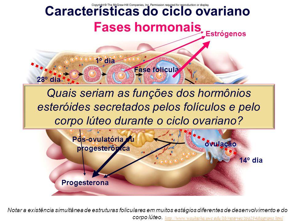 Características do ciclo ovariano Fases hormonais