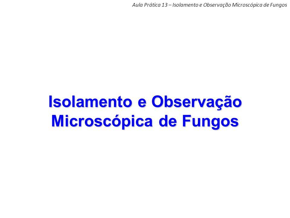 Isolamento e Observação Microscópica de Fungos