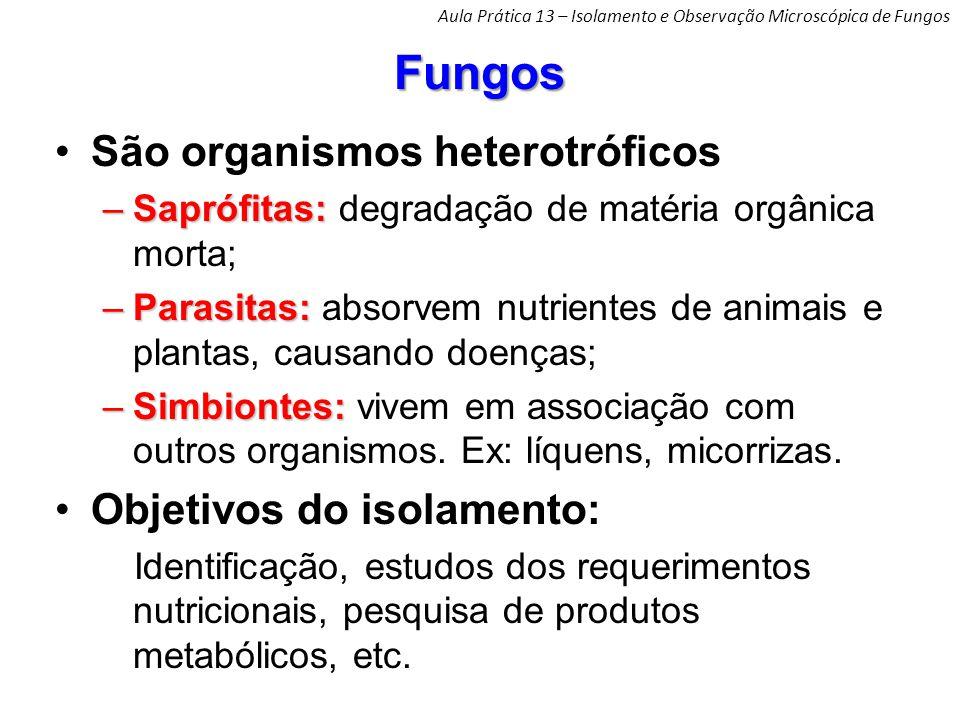 Fungos São organismos heterotróficos Objetivos do isolamento: