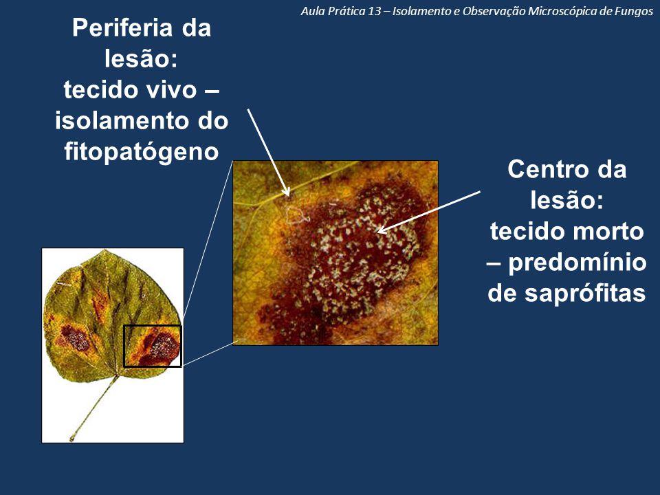 tecido vivo – isolamento do fitopatógeno