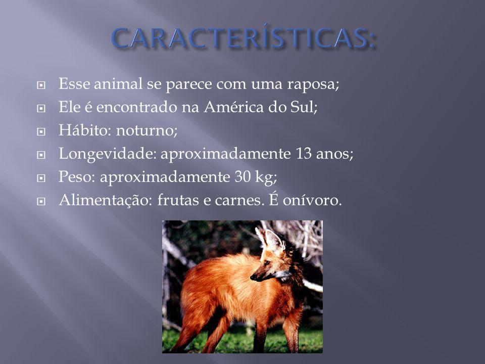 CARACTERÍSTICAS: Esse animal se parece com uma raposa;