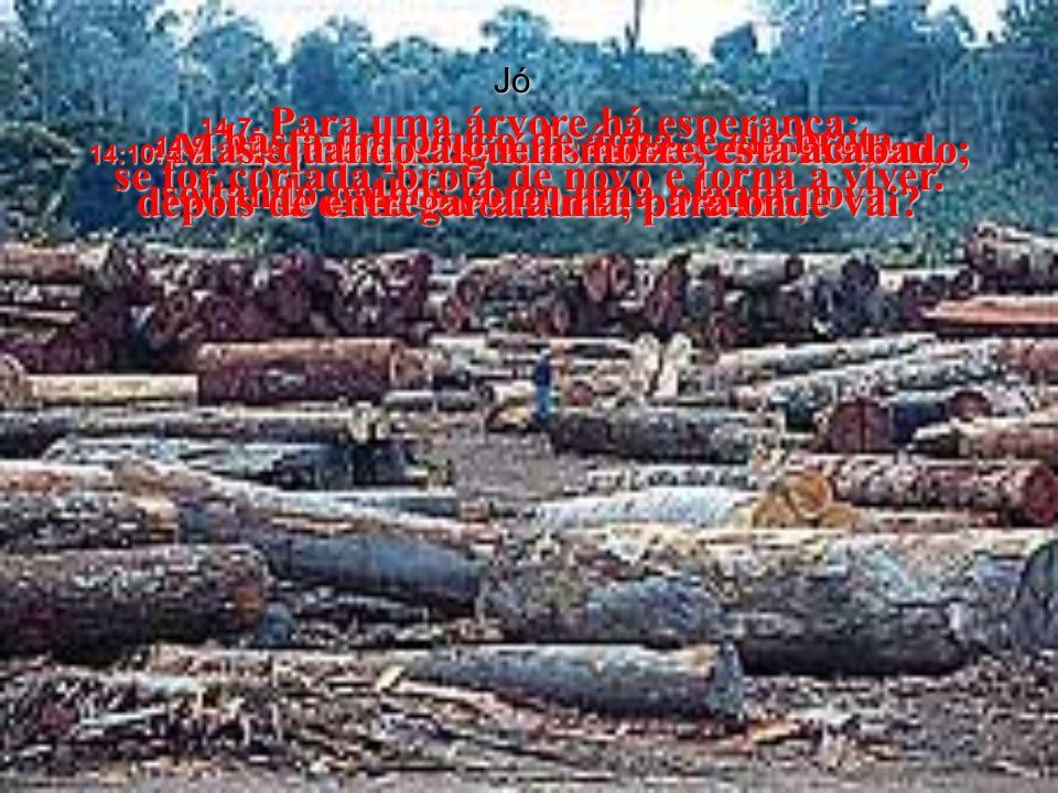 Jó 14:7- Para uma árvore há esperança; se for cortada, brota de novo e torna a viver.