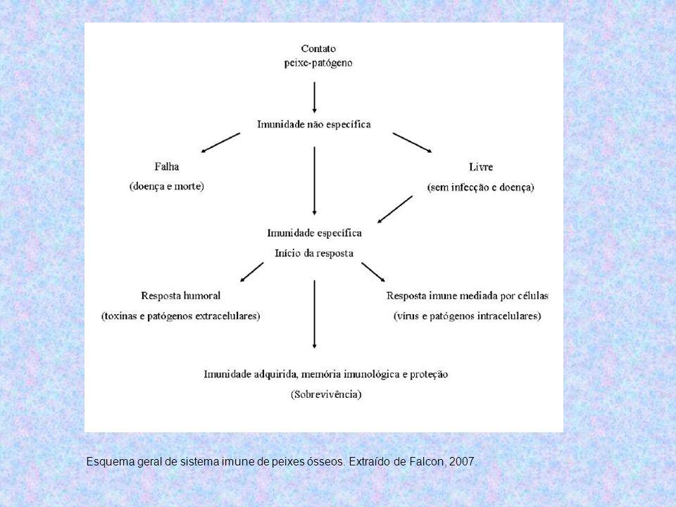 Esquema geral de sistema imune de peixes ósseos