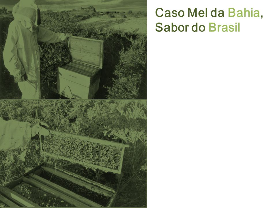 Caso Mel da Bahia, Sabor do Brasil