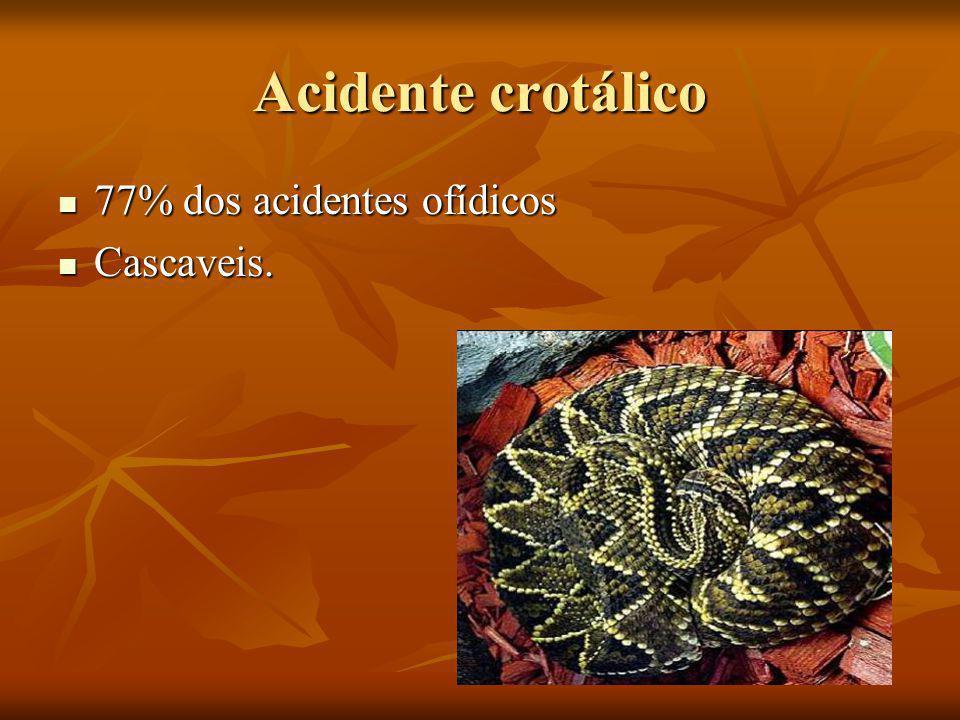 Acidente crotálico 77% dos acidentes ofídicos Cascaveis.