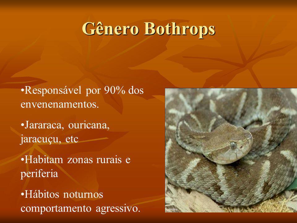 Gênero Bothrops Responsável por 90% dos envenenamentos.