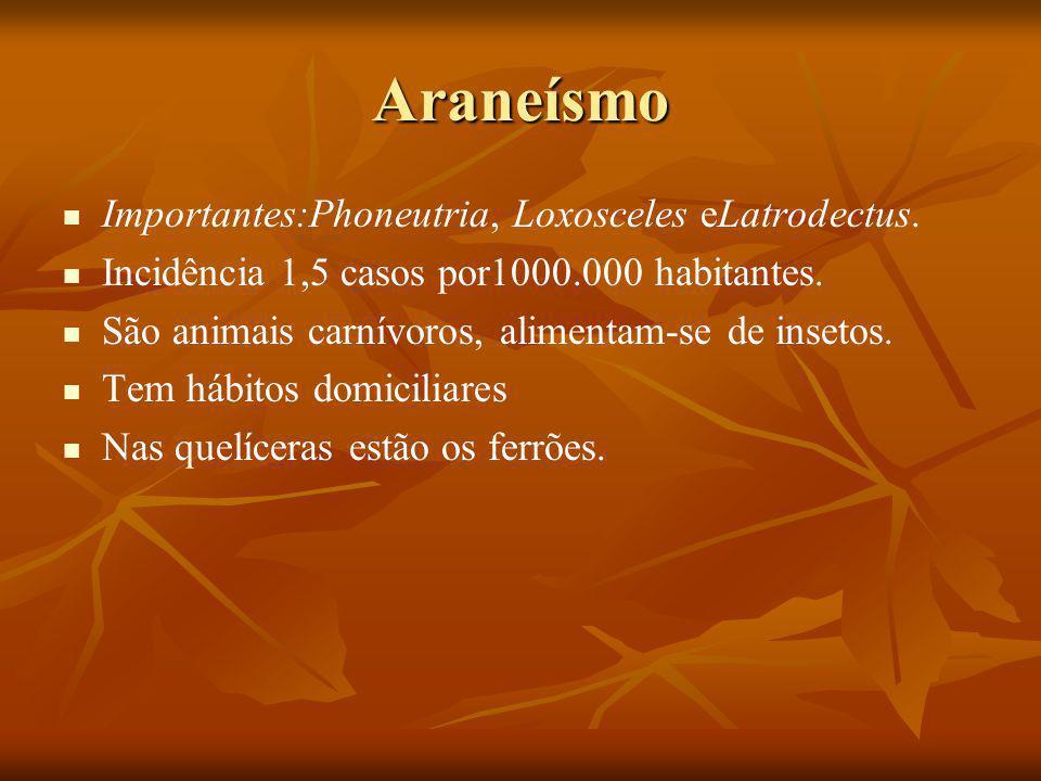 Araneísmo Importantes:Phoneutria, Loxosceles eLatrodectus.